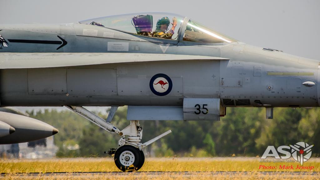 Tiger Bird-33