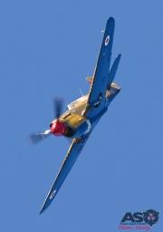 Mottys-HVA2019-P-40E-Kittyhawk-VH-KTY-11490-DTLR-1-001-ASO