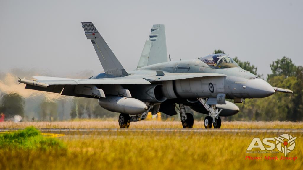 Tiger Bird-45
